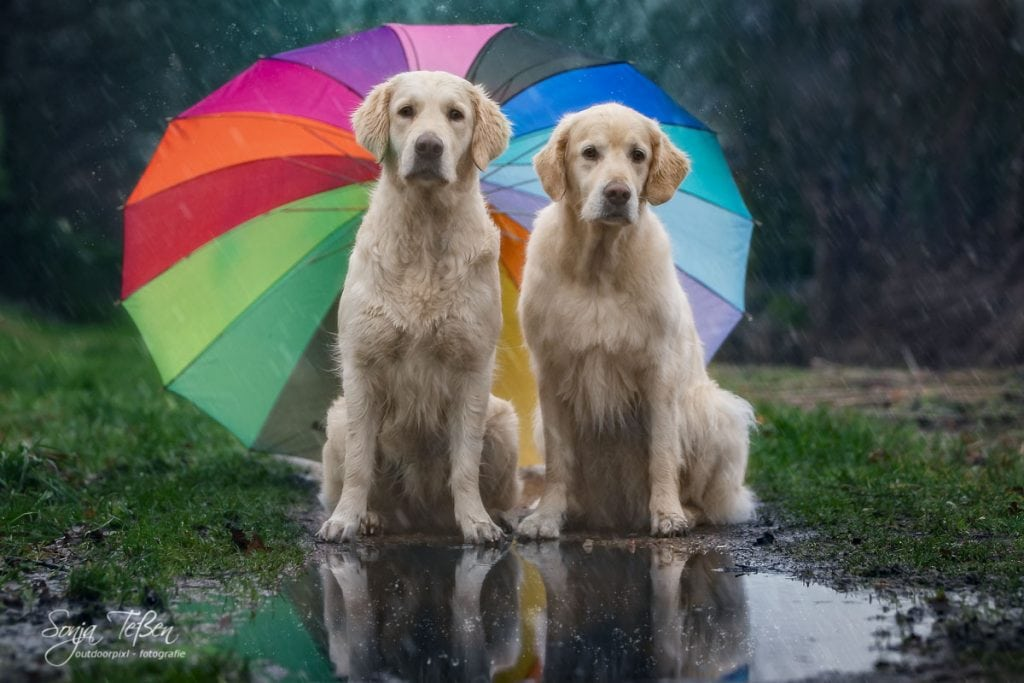 Hunde mit Regenschirm