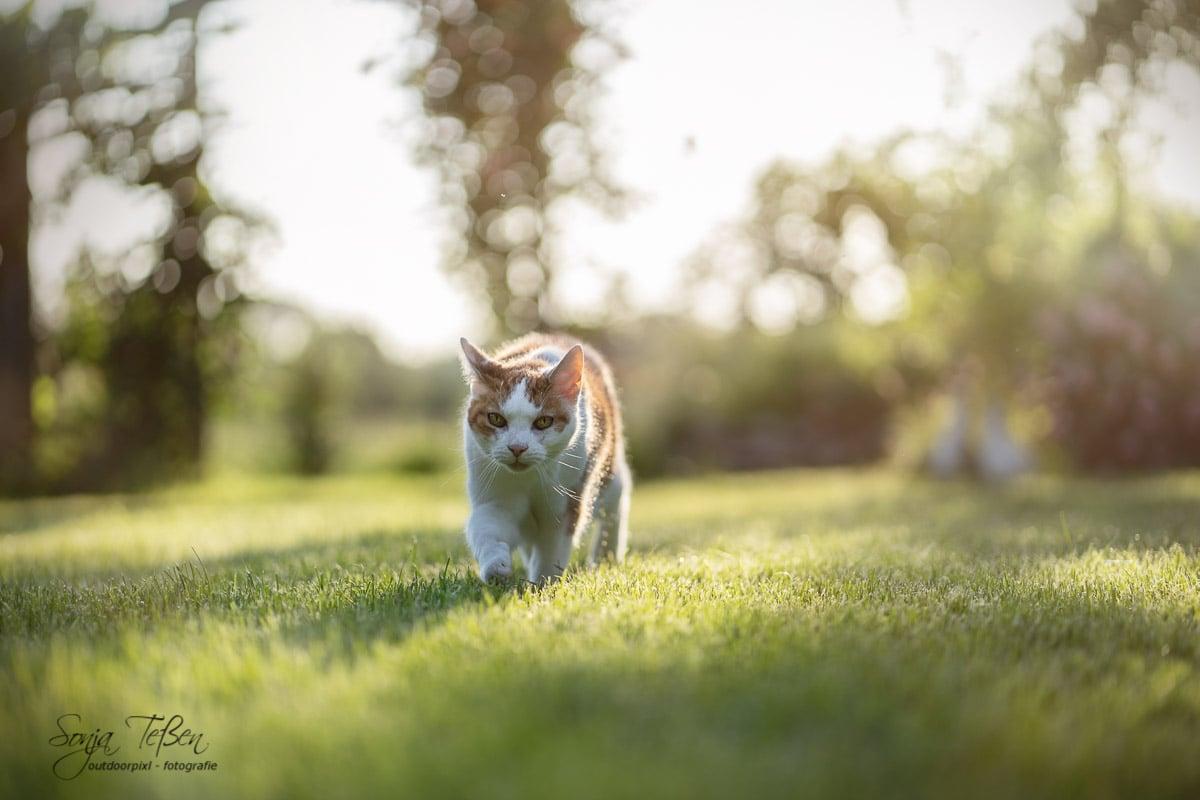 Lilly auf Gartenpatrouille