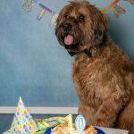 10. Geburtstag Briard
