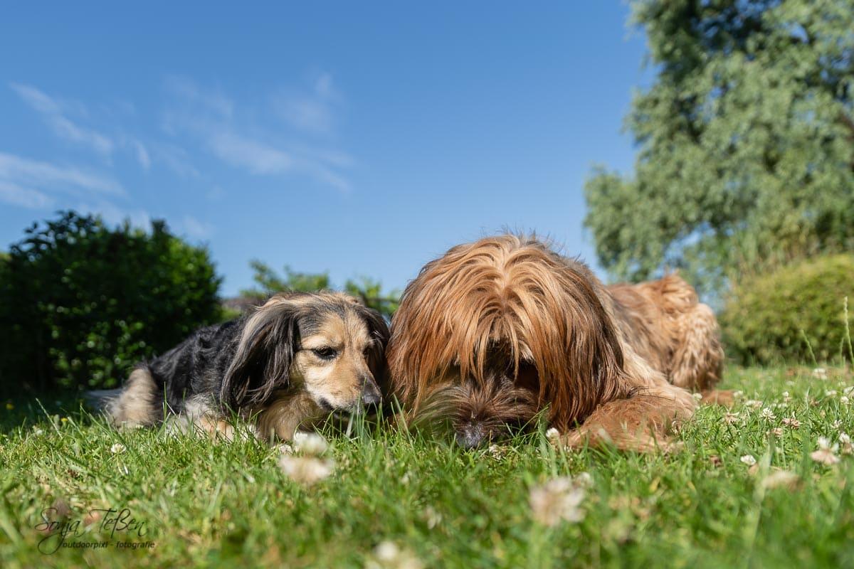 zwei Hunde auf Entdeckungsreise