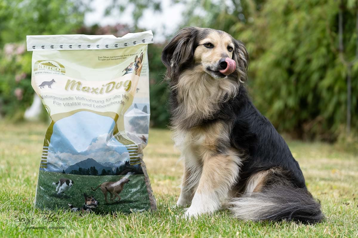 Hund mit Futtersack von Reico