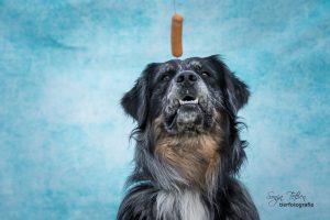 Hund mit Würstchen