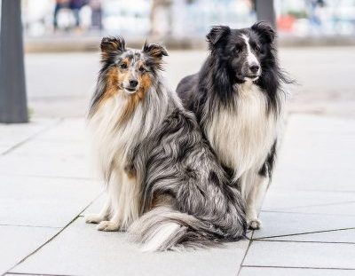 Vital-Systeme für Hunde
