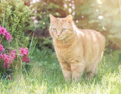 Vital-Systeme für Katzen
