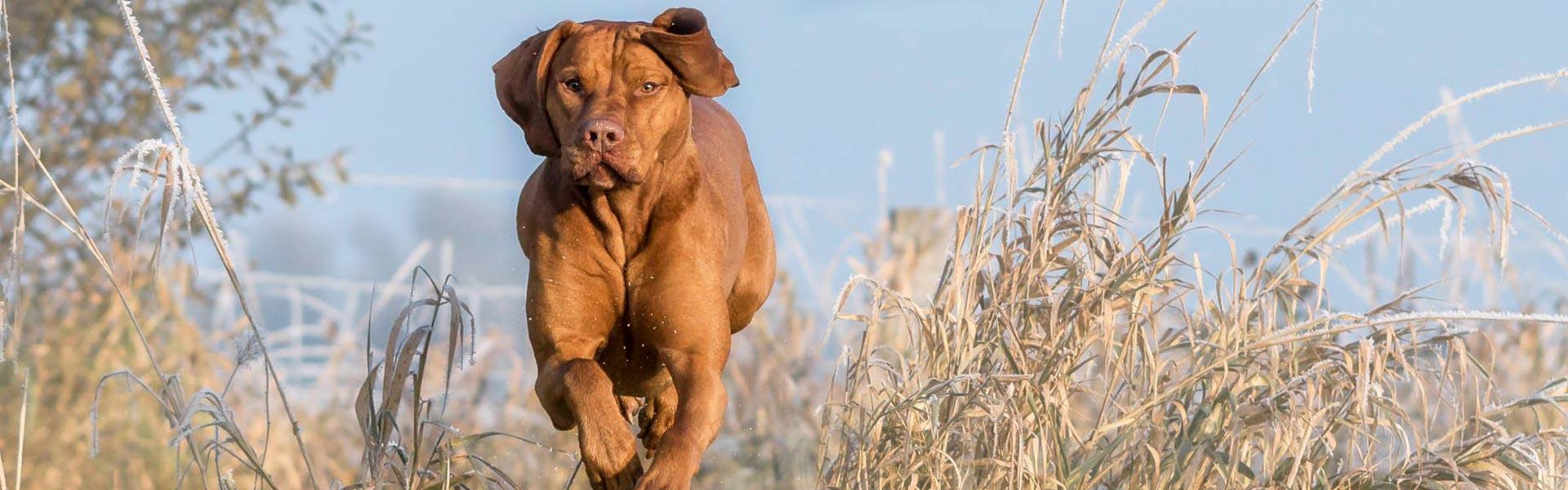 100 % Natur für ein vitales und gesundes Hundeleben.