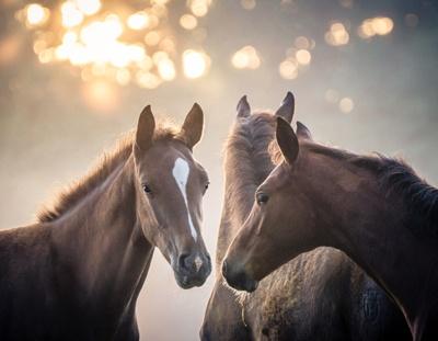 Vital-Systeme für Pferde