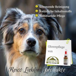 Ohrenpflege für Hunde