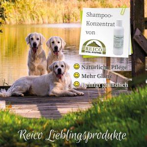 Reico Shampoo-Konzentrat