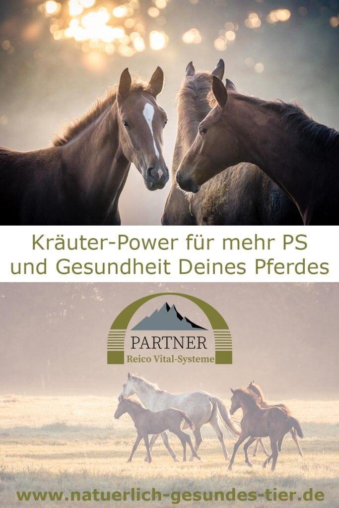 Pferde-Kräuter