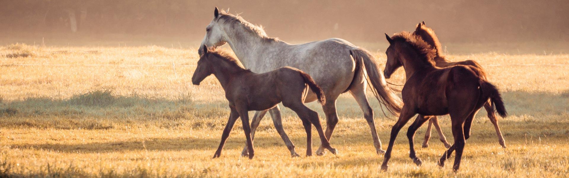 Die Kraft der Kräuter für gesunde Pferde