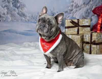 Reico Weihnachtswelt