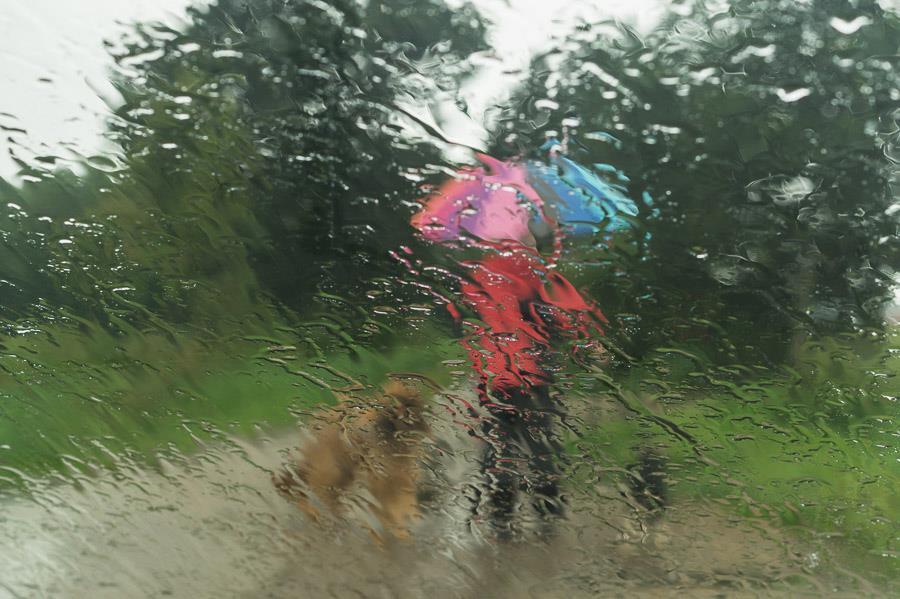 Regenspaziergang mit Hunden