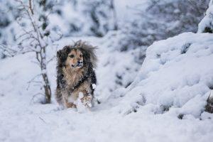 Hund im hohen Schnee