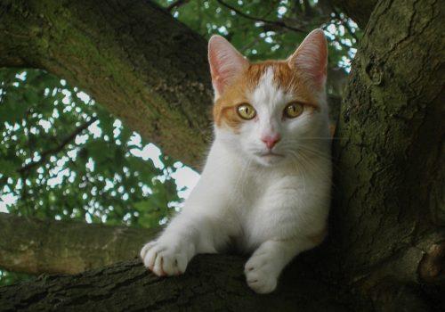 """Aus dem Leben unserer Katze """"Lilly"""""""