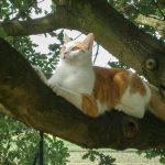 Lilly-im-Baum