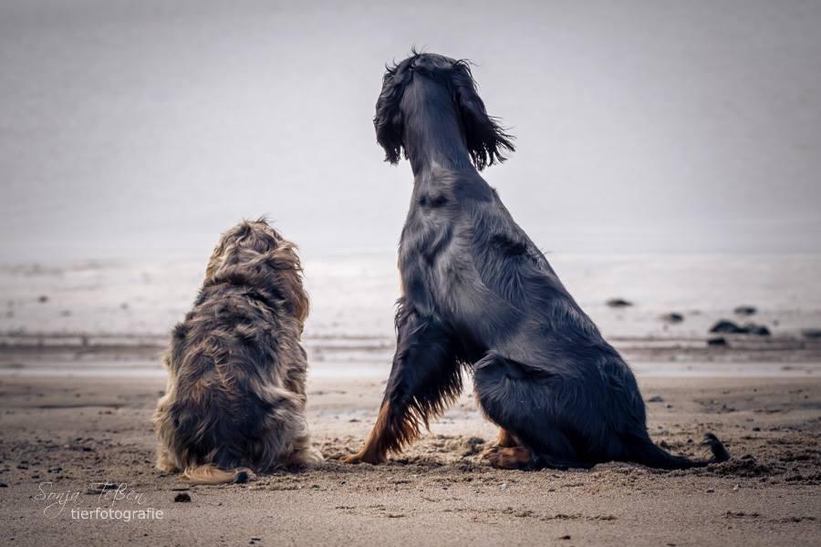dicker und dünner Hund