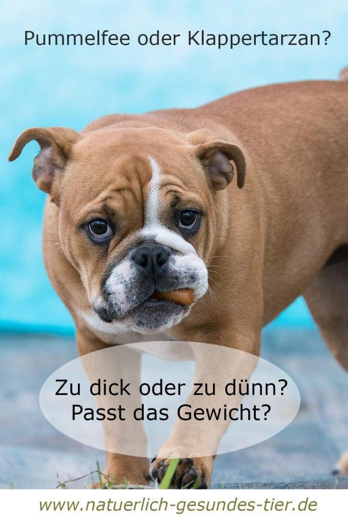 Hund mit Würstchen im Maul
