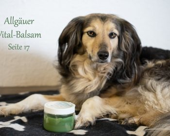 Allgäuer Vital-Balsam