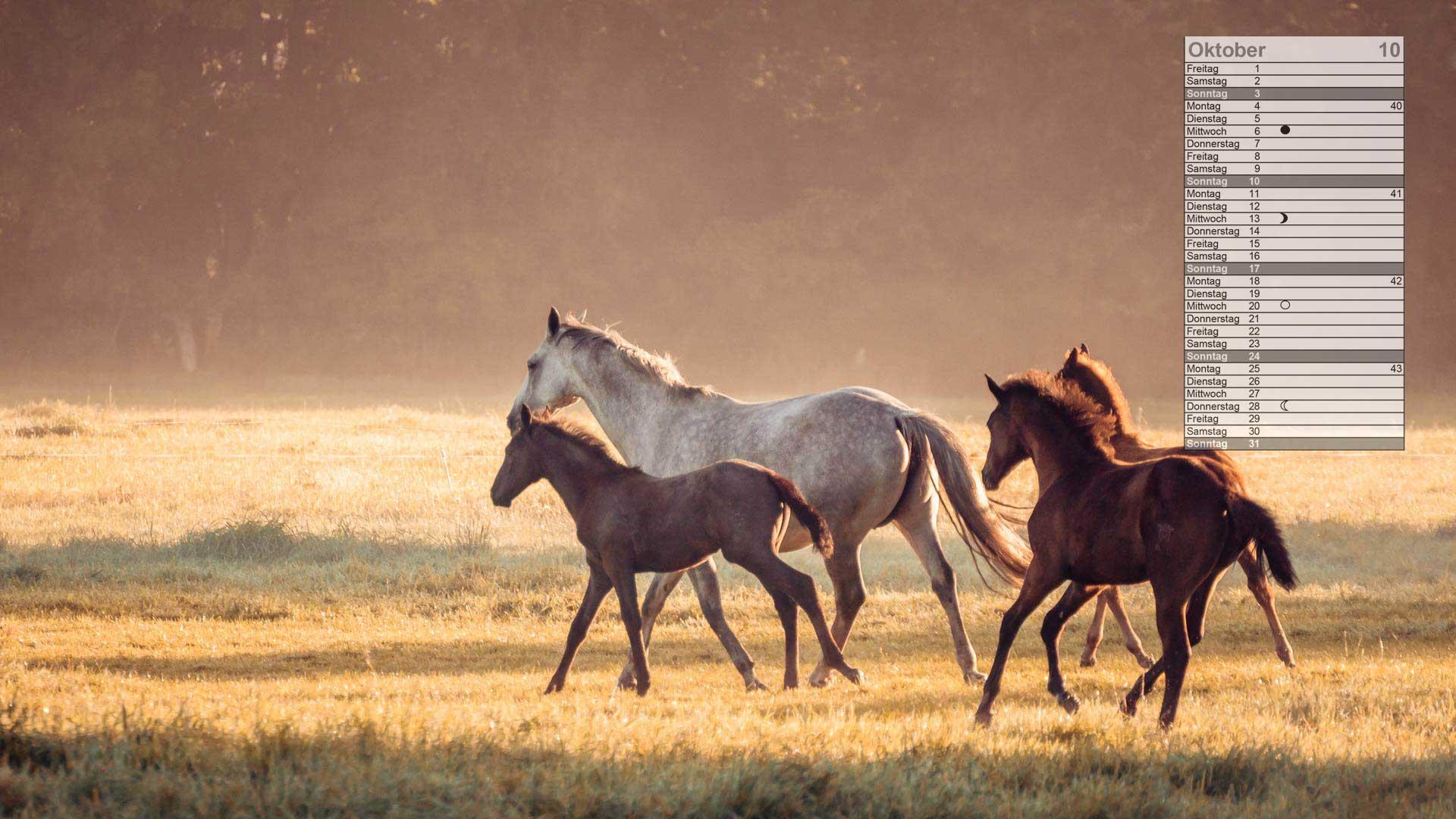 Pferde Mondkalender