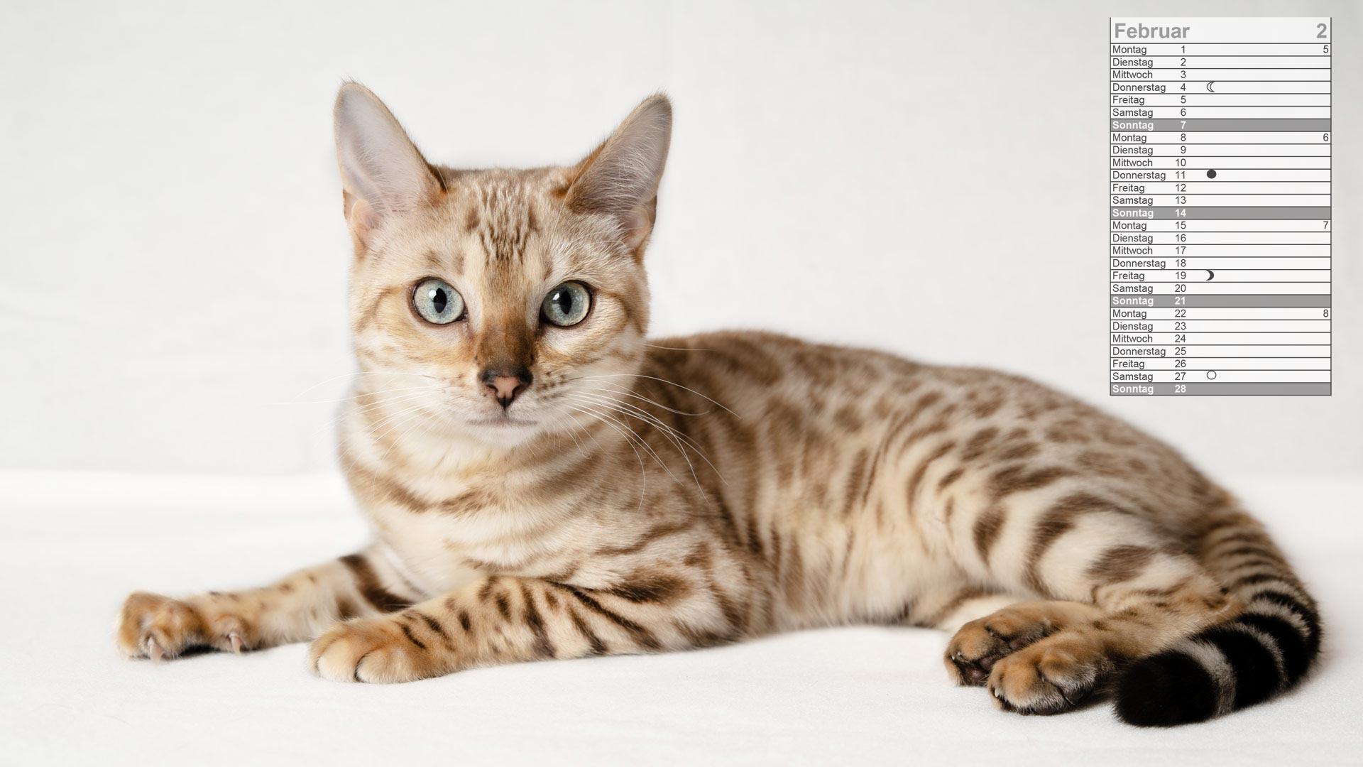 Bengal Katze Mondkalender