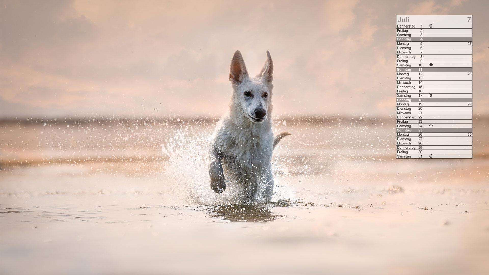 weißer Schäferhund Mondkalender