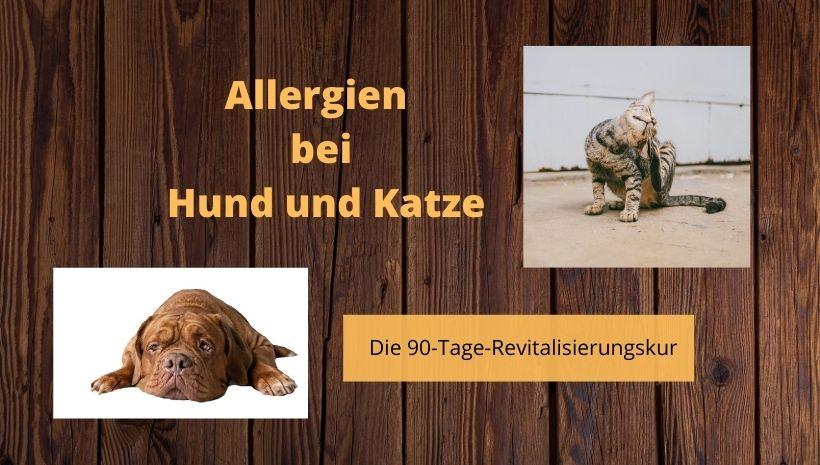 Titelbild Allergien bei Hund und Katze