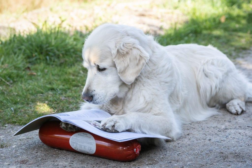 Goldie mit Produkthandbuch
