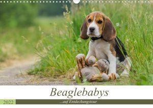 Kalender Beagle 2022